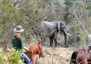 Horseback Safari in Victoria Falls
